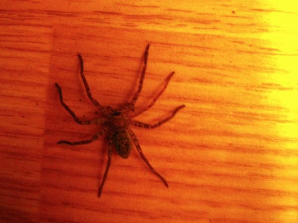 mr-spider